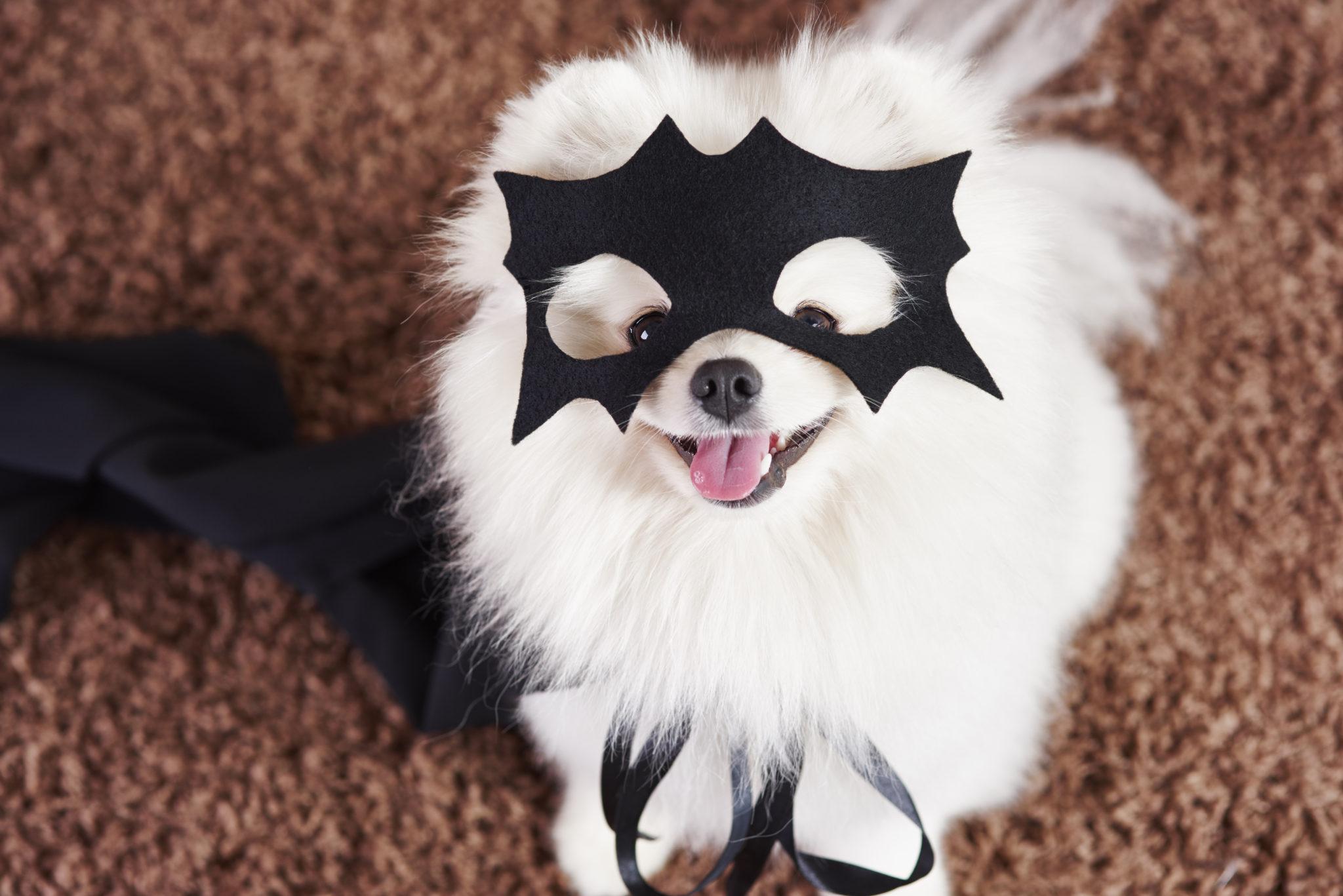 Catalina West Pet Costume