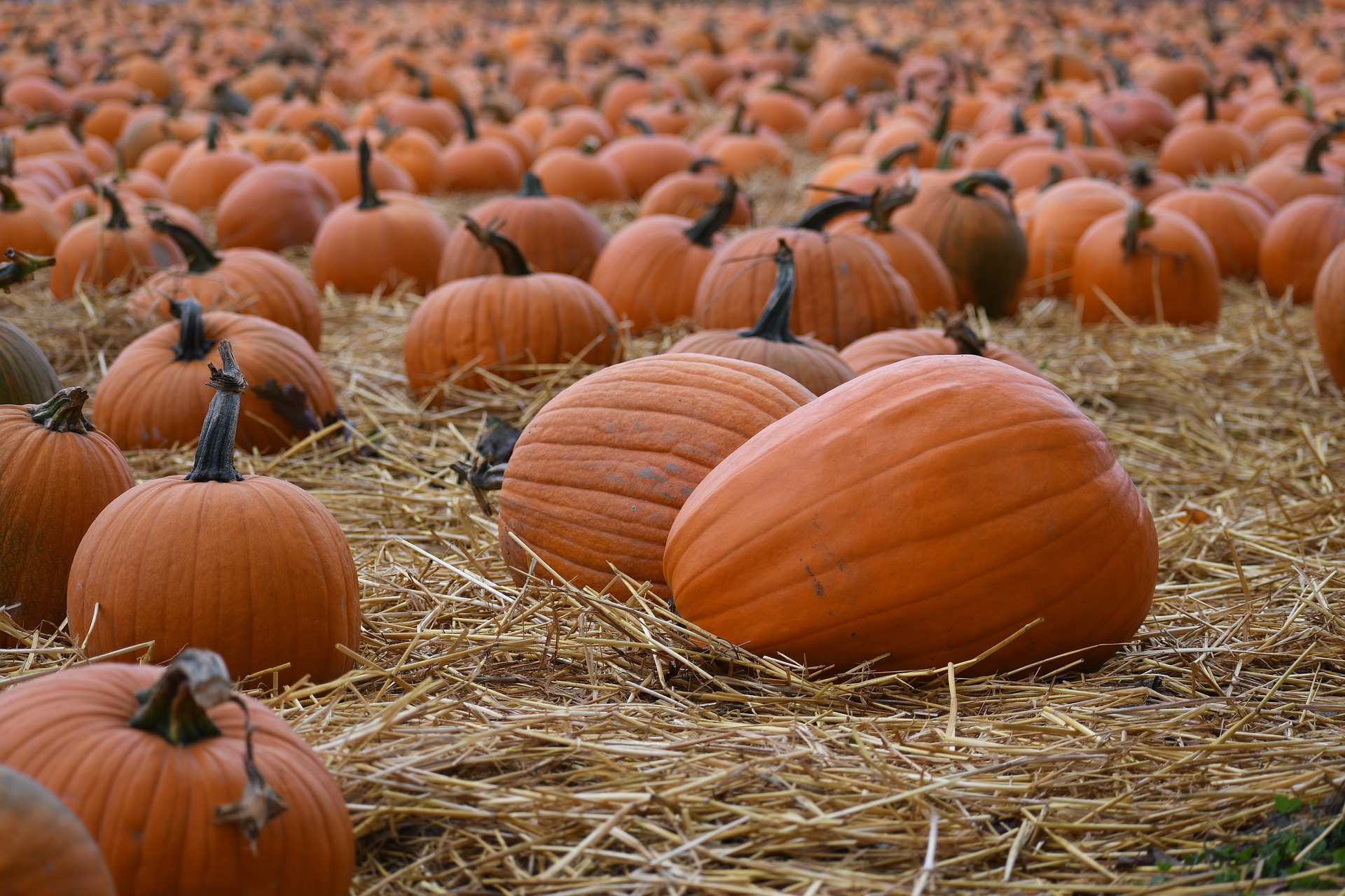 Image of a Pumpkin Patch